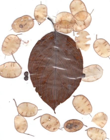 leaves2009
